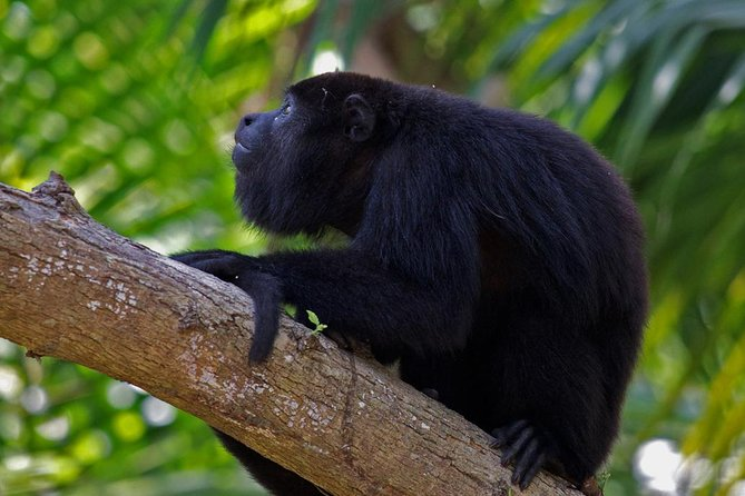 Private Howler Monkey Adventure From Belize City