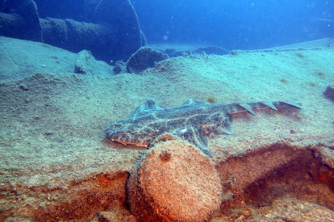 2 Dive Package for PADI Qualified Divers in Gran Canaria photo 4