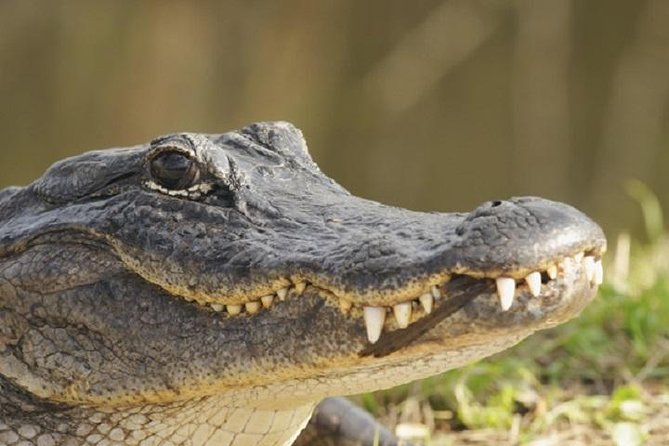 Everglades Adventure Air boat Tour and Show with Bus Transportation