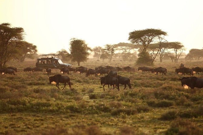 3 Days Tanzania Camping Safari photo 3