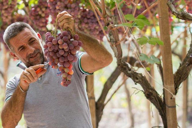 Seedless Grapes Farm Tour