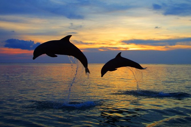 Dolphin Tour in Lovina