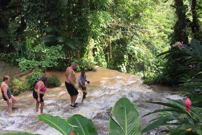Shared Konoko Falls and Tropical Garden Tour from Runaway Bay