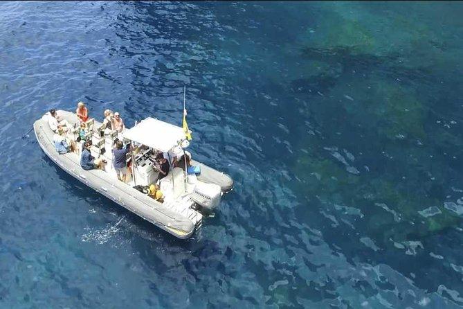 SEA SAFARI TENERIFE. Puerto Colon. Los Gigantes. Masca. Dolphines bladefish