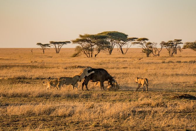 3 Day Serengeti and Ngorongoro Crater Tour photo 8