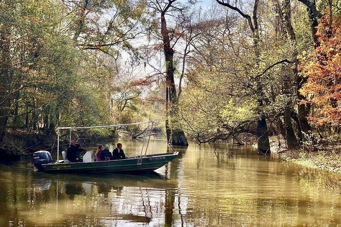 Maurepas Swamp Tour, Small-Group Ecotour