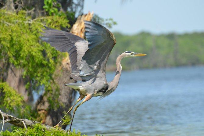 great birdwatching!