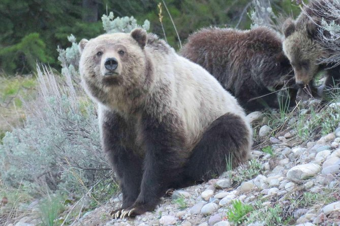 Grand Teton National Park - PRIVATE Full-Day Tour from Jackson Hole