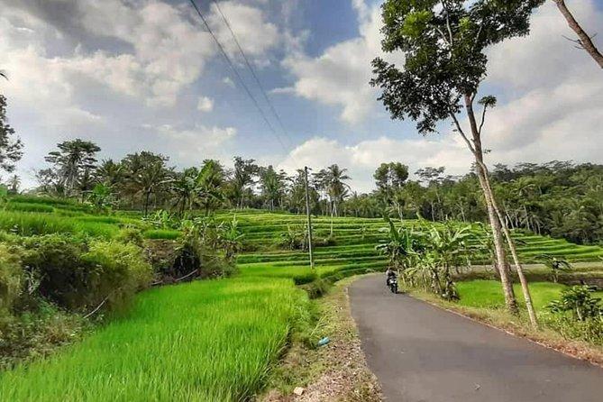 Explore Bali's Little Jatiluwih : Golden Village