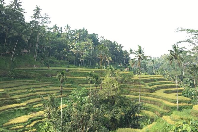 Kintamani Vulcano and Ubud Tour
