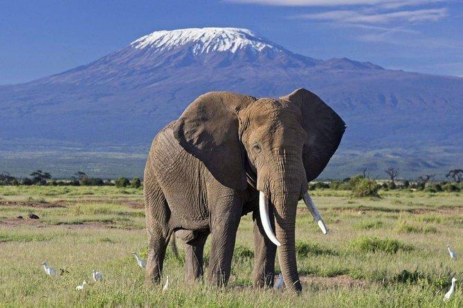 2 Day Explore Amboseli National Park Safari