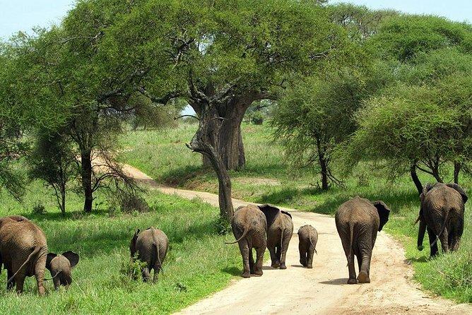 5 Days Tanzania Luxury Lodge Safari Tour