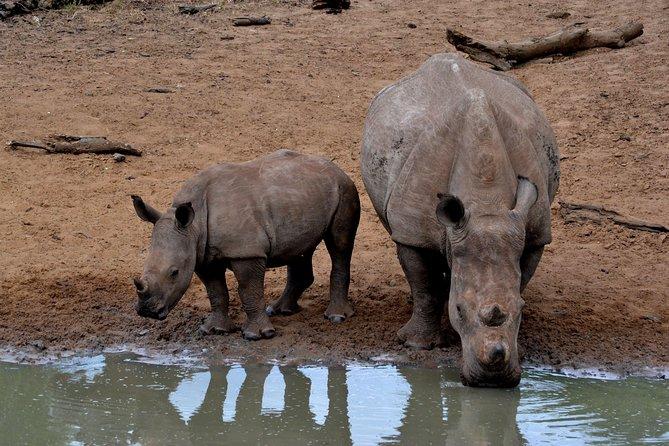 Tala Mini Day Safari - Durban