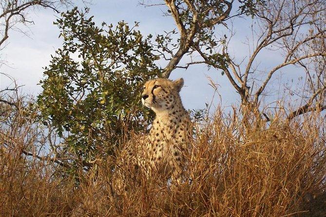 Johannesburg South Africa De Wildt Cheetah and Wildlife Trust