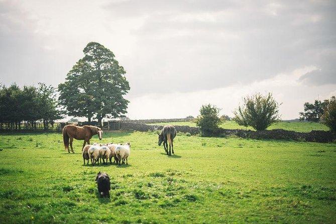 Glendalough,Wicklow and Kilkenny Tour including Sheepdog herding demonstration
