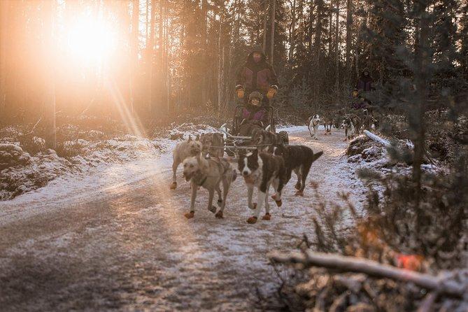 Born to Run morning tour (Early Winter)