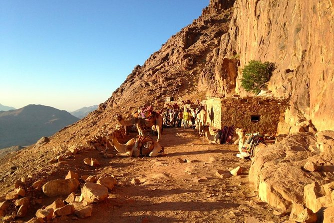Half Day to St. Catherine Tour and Claiming Sinai Mountain