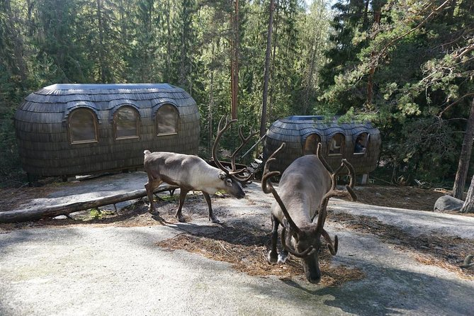 Helsinki National park and Reindeer farm visit by VIP car with private guide
