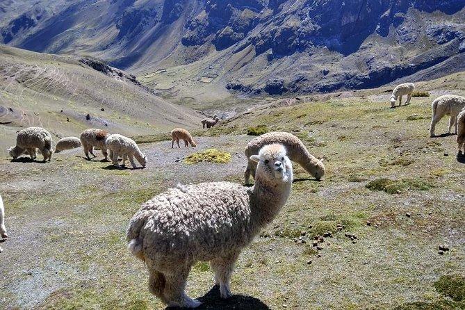excursion cusco magico 4 days city tours valley vip machupicchu mountain colors