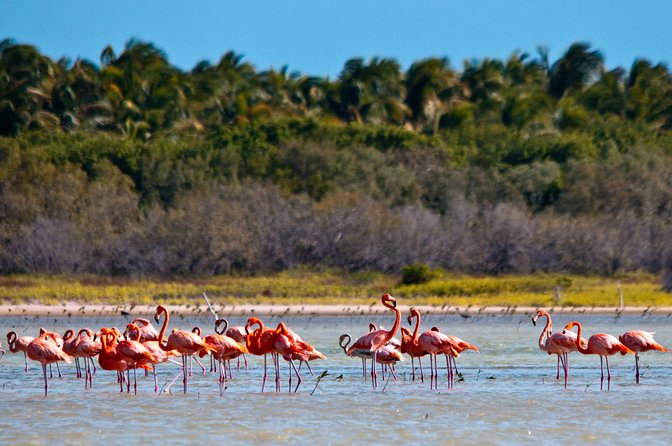 Flamingo Island - Laguna Oviedo