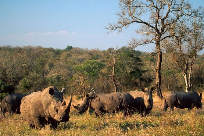 South Africa. Cape Town Best Of Aquila Safari Fullday Tour