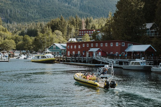 Zodiac Whale Watching Adventure from Telegraph Cove