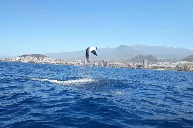 Tenerife Turtles by Kayak and Snorkeling Adventure 5+ groups discounts