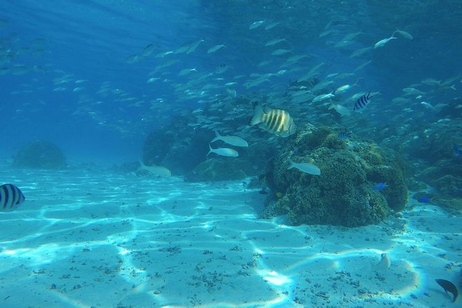 Narii PRIVATE Half Day Cultural & Lagoon Tour