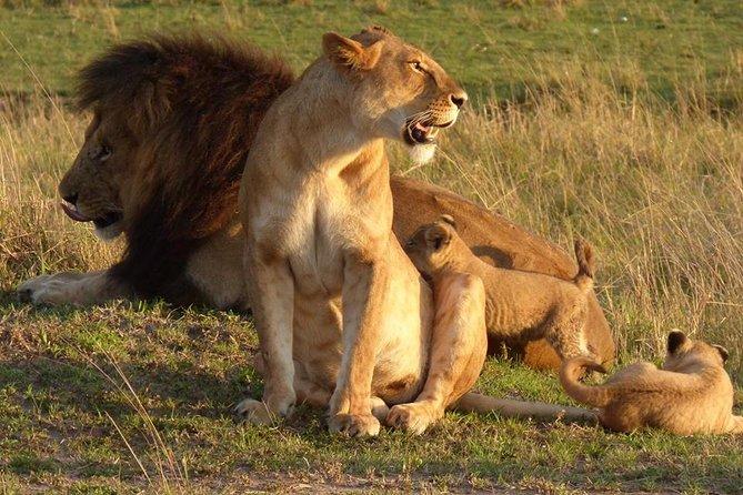 2 Days Masai Mara Budget Safaris