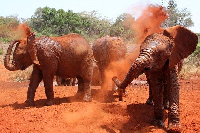 Daily David Sheldrick Elephant Orphanage Giraffe Centre, Kazuri Beads Tour