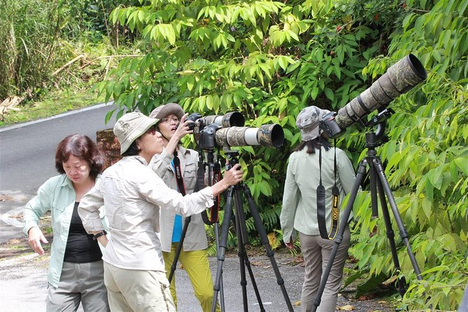 Fraser's Hill Bird-Watching & Nature Sightseeing Tour from Kuala Lumpur