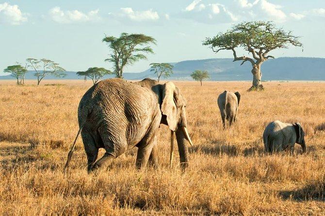 Serengeti National Park Day Trip From Mwanza