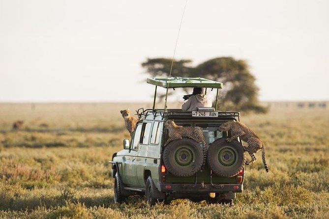 2 Days - Serengeti Explore Safaris From Mwanza