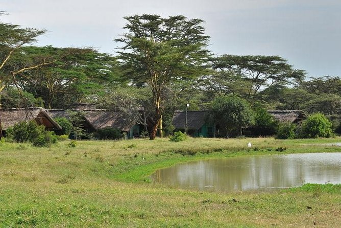 A Ol Pejeta 3 Day Safari And A Trip To Ngare Ndare Forest Reserve Mid Range photo 9