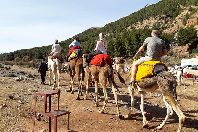 Atlas Mountains and camel ride day trip