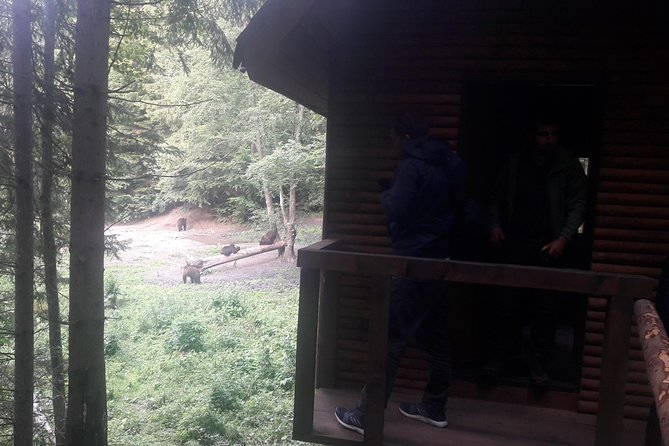 Bear Watching in The Wild from Brasov photo 2