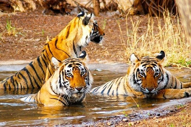 Golden Triangle Tour with Wildlife / Taj & Tiger