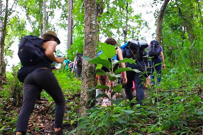 1 day private eco-trekking at Mae Sa Pok, Doi Inthanon