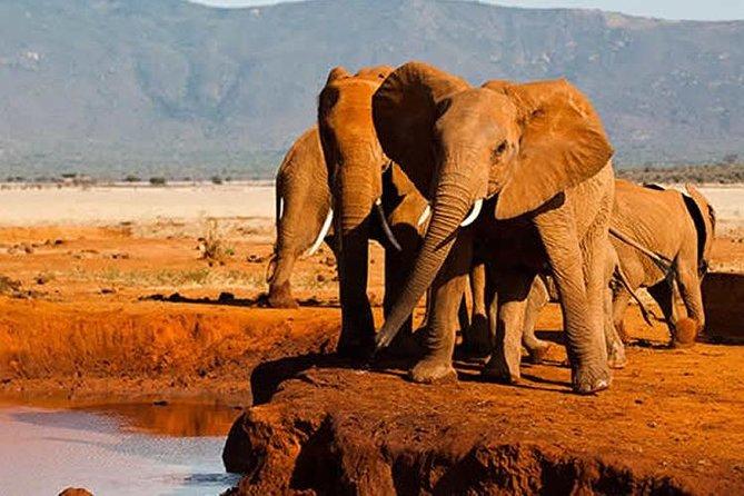 3 Days Tsavo East Panari Safari Package