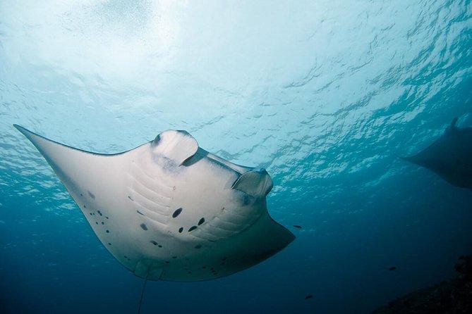 Nusa Penida Two Dives Trip