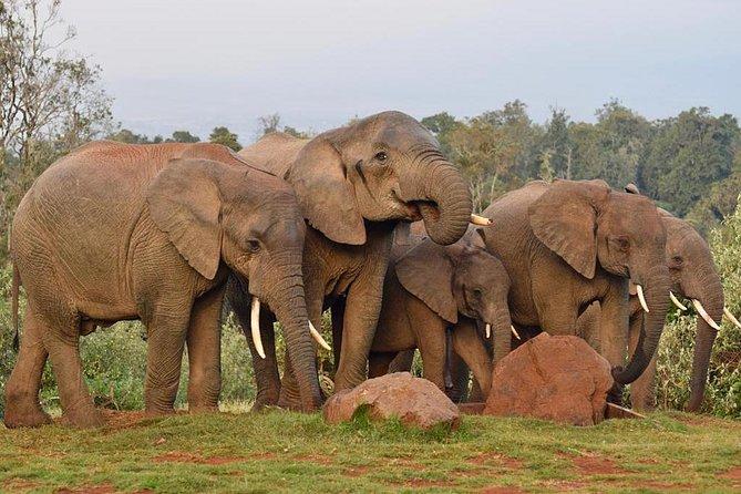 4 Day Aberdare and Samburu Adventure Trip