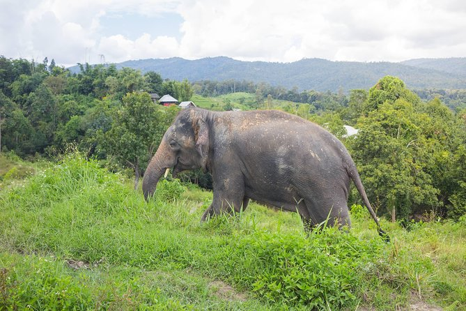 2 days: private eco-trekking & Elephant sanctuary with hill tribe overnight