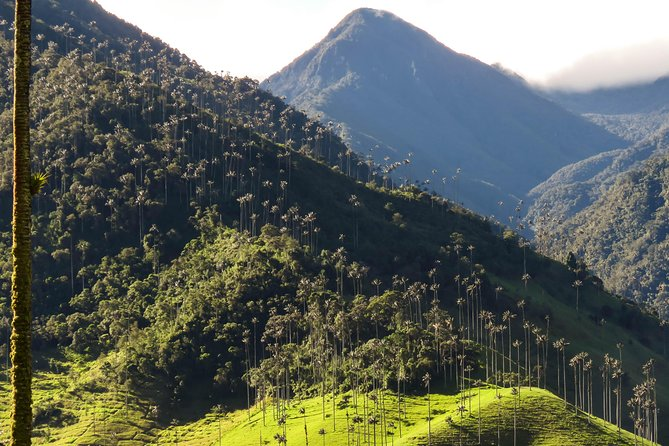 Cocora Valley & Hummingbirds House Adventure photo 1