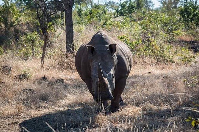 Game Drive And Rhino Walk
