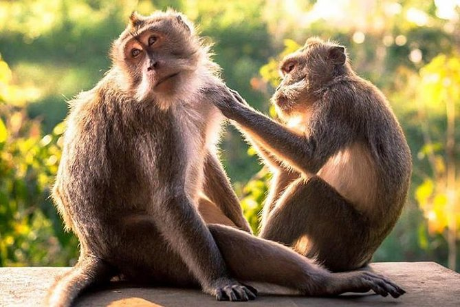 Monkey Forest, Ubud Market, Rice Terrace, Temple and Waterfall Tour