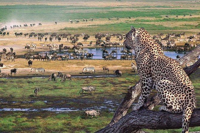 3 Day Joined Group Mid-range Safari Serengeti and Ngorongoro National Park
