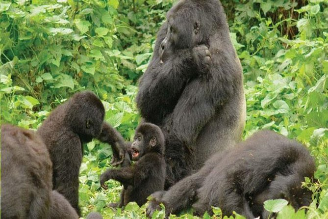 6 Days Wildlife and Gorillas in Uganda