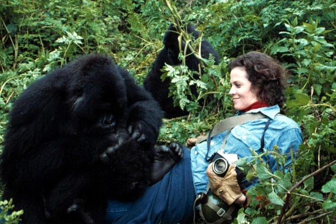 4 Days Dian Fossey Hike, Rwanda Gorilla Tracking