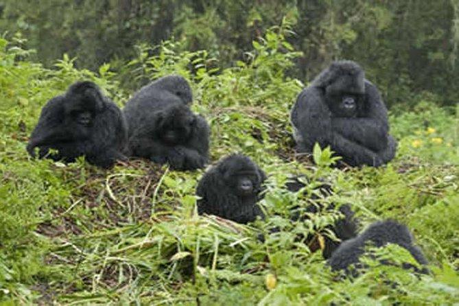 4 Days Gorilla Trek & Lake Mburo Wildlife Tour