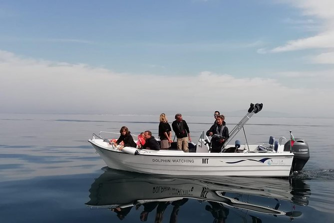 Small Group - Dolphin and Wildlife Watching in Faro